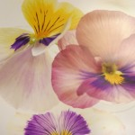 Together UK | Growing Together exhibition: Violas by Shane Biddle